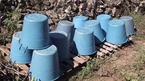 empty washed grape buckets