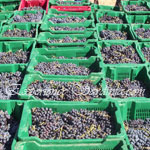 collection of grapes in crates