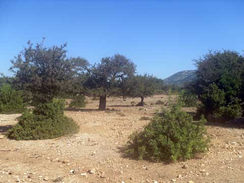 the golgo plains in baunei ogliastra sardinia