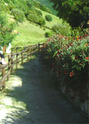 the pathway leading the the accommodations at the agriturism