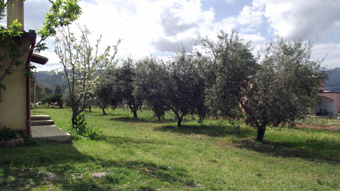 sardinia olive grove near the Apartment