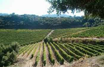 sardinia vineyards