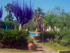 garden surrounding the swimming pool at the villa