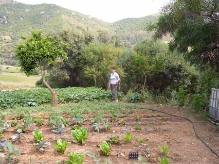the vegetable garden in the argriturism