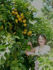 me in a lemon tree